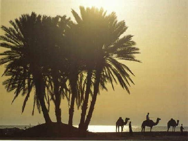 http://img.eramuslim.com/media/2010/11/0arab_desertok.jpg