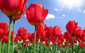 tulib1