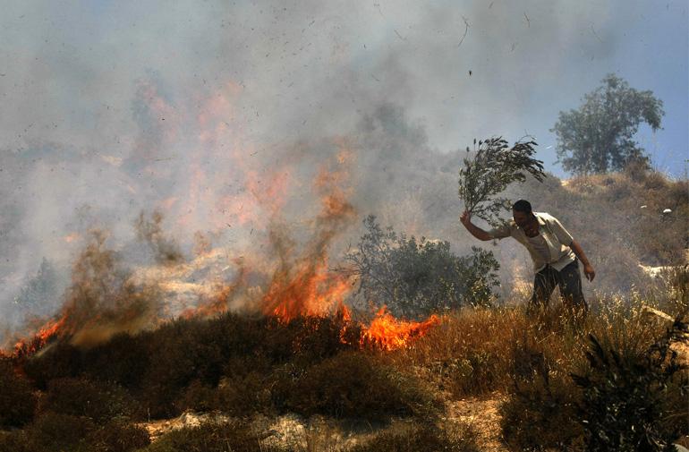 palestine-olive-trees-settlers-set-fire-