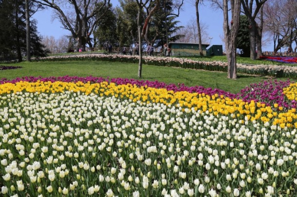 Bagaimana keindahan festival bunga tersebut? mari kita lihat sejenak;